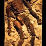 09 fossil figure
